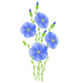 flower of flax lignum situates vector image