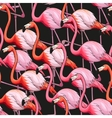 Colorful flamingo seamless background vector image