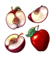 Set with red fresh apples and pieces of apples vector image