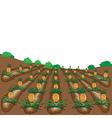 pineapples fruit cartoon vector image