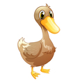 A brown baby duck vector image