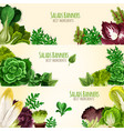 salads or leafy vegetables banners set vector image