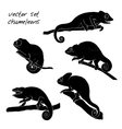 Set of chameleon Reptiles vector image