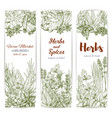 herbs and spices sketch banners vector image