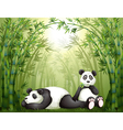 Two pandas in the bamboo forest vector image vector image