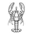 ink sketch of lobster vector image
