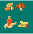 piles of different nuts hazelnut almond peanut vector image