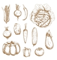 Isolated vegetables in retro sketched style vector image