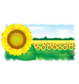 sunflower and field vector illustration vector image