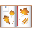 autumn notebook vector image vector image