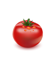 Red big fresh tomato vector image
