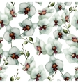 Beautiful orchid flower6 vector image