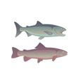 fish salmon vector image