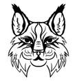 lynx head sketch graphics monochrome vector image