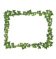 Ivy square frame vector image