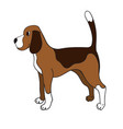 cute cartoon beagle isolated on white background vector image