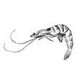 Hand sketch shrimp vector image