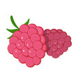 raspberry sweet fruitfruit single icon in vector image