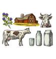 set milk farm cow head clover box carton vector image