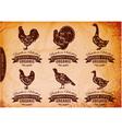 diagram cut carcasses chicken turkey goose duck vector image