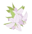 Lilies isolated on white background vector image
