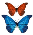 Red and blue beautiful butterfly insect vector image