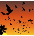 Sunset birds silhouettes vector image