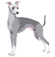 greyhound dog vector image vector image