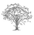 freehand drawing tree vector image