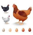 Realistic Hens in different breeds and eggs vector image