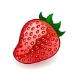 Isolated fresh shiny strawberry on white vector image