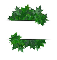 Summer maple leaves vector