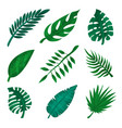 green tropical leaf set palm leaves vector image