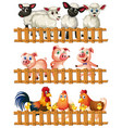 farm animals behind the wooden fence vector image vector image