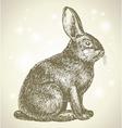 Bunny sketch vector image