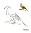 Eurasian jay bird coloring book vector image