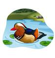 Mandarin Duck vector image