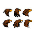 sport team eagle or hawk bird head vecor mascot vector image