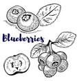 set of blueberries on white background design vector image