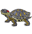 red eared slider turtle vector image