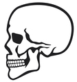 human skull profile vector image