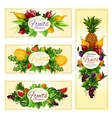 Fruit and berry banner for diet food drink design vector image