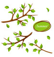 summer set with branches of tree and green leaves vector image
