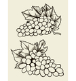 Set of various grape vector image
