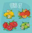 set of isolated cliparts organic citrus fruits vector image