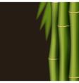 Bamboo design template vector image