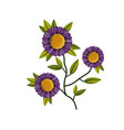 purple daisy flower plant in white background vector image