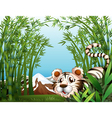 A tiger in a bamboo forest vector image vector image