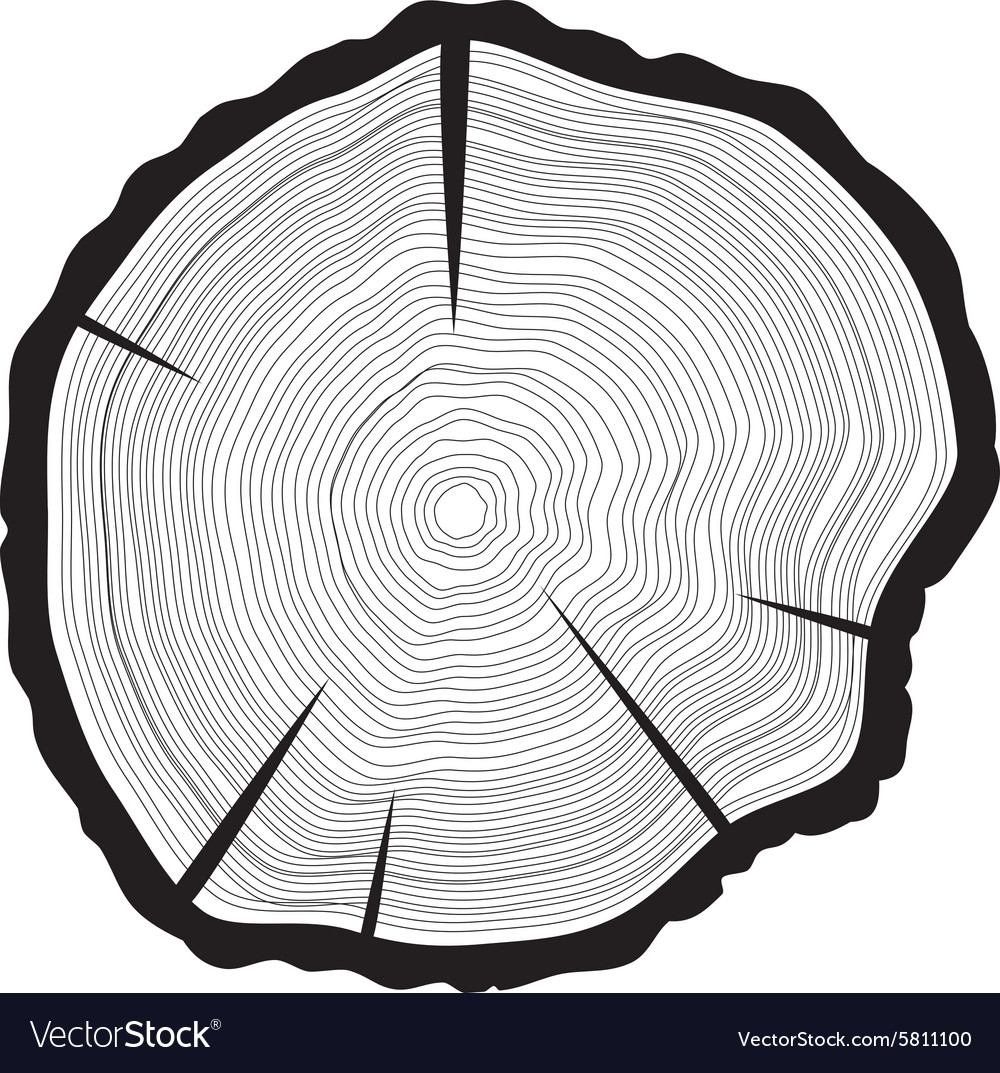 Tree rings background annual tree vector