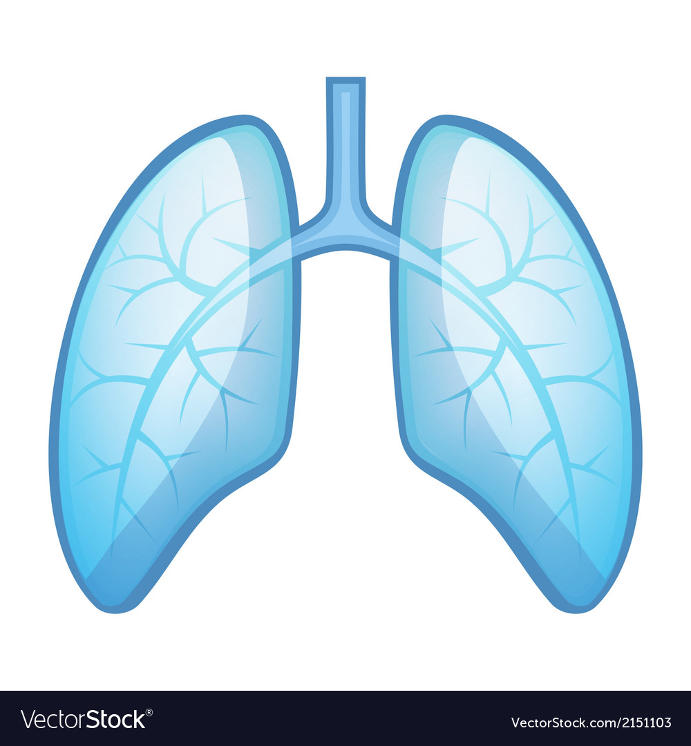 Human health lungs and bronchi vector